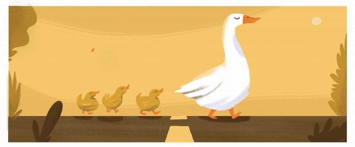 Quack mayo 2016