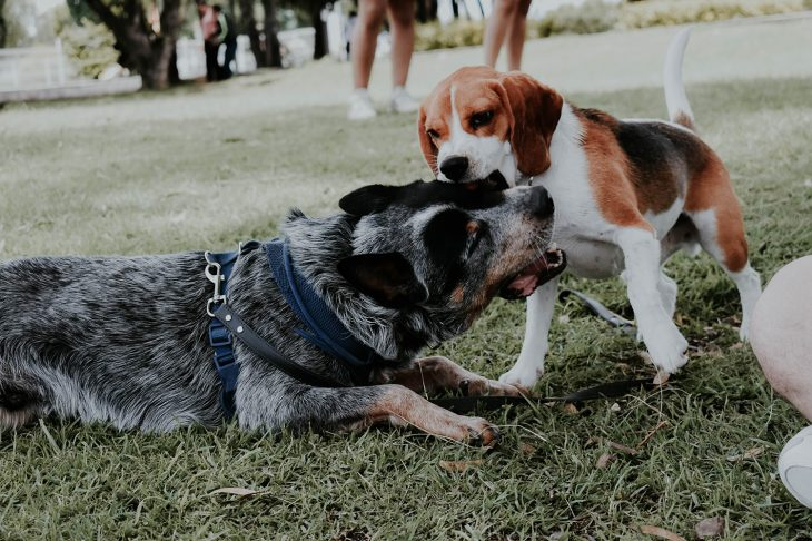 Salir con perros